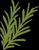 ilustração de dois galhinhos de alecrim verdes